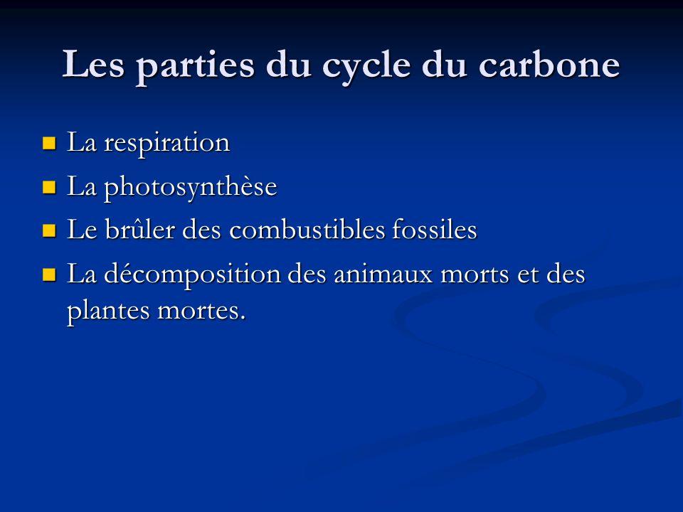 Les parties du cycle du carbone La respiration La respiration La photosynthèse La photosynthèse Le brûler des combustibles fossiles Le brûler des combustibles fossiles La décomposition des animaux morts et des plantes mortes.