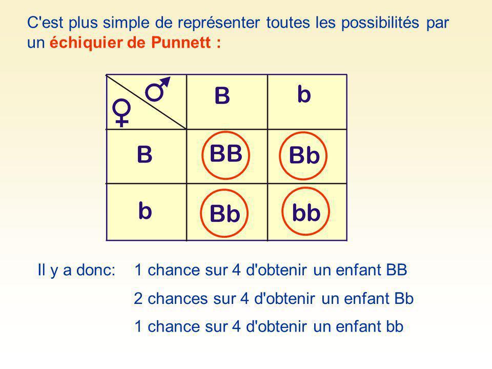 C'est plus simple de représenter toutes les possibilités par un échiquier de Punnett : Il y a donc:1 chance sur 4 d'obtenir un enfant BB 1 chance sur