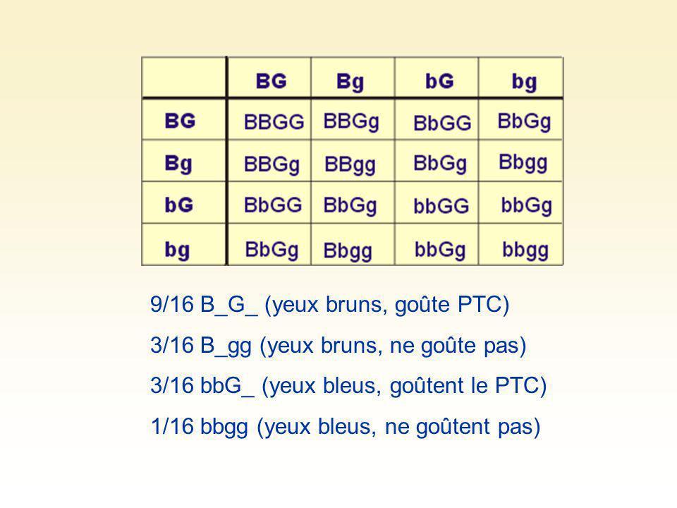 9/16 B_G_ (yeux bruns, goûte PTC) 3/16 B_gg (yeux bruns, ne goûte pas) 3/16 bbG_ (yeux bleus, goûtent le PTC) 1/16 bbgg (yeux bleus, ne goûtent pas)