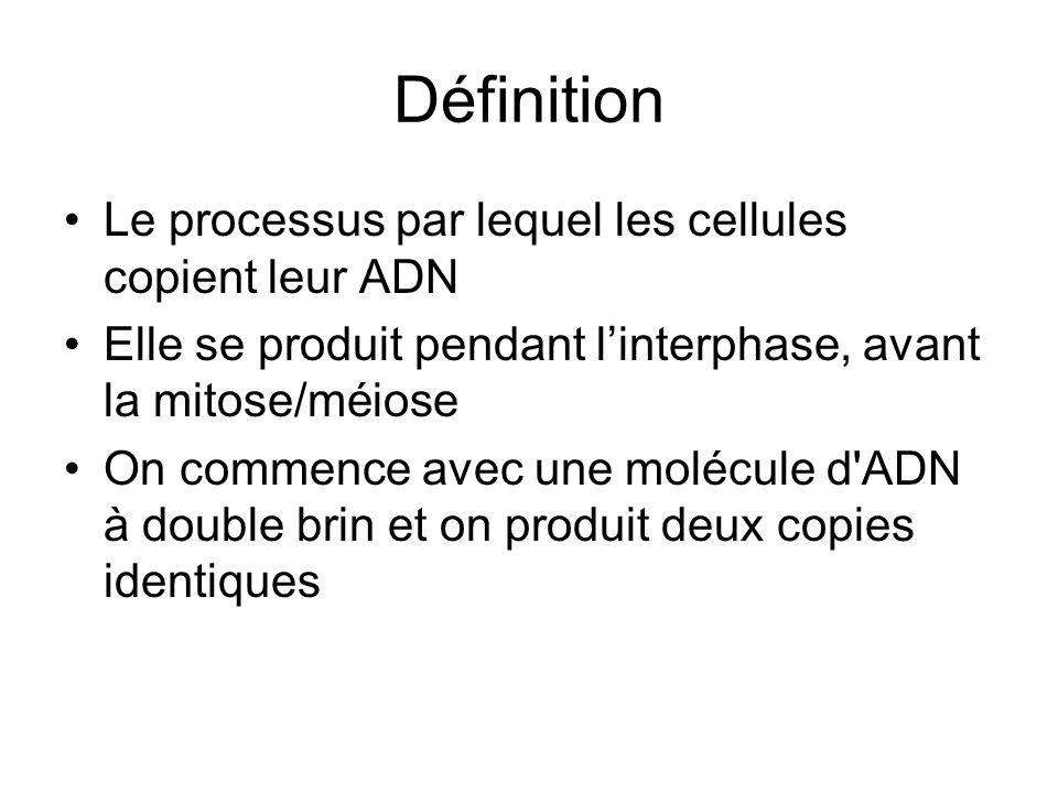 Définition Le processus par lequel les cellules copient leur ADN Elle se produit pendant linterphase, avant la mitose/méiose On commence avec une molé
