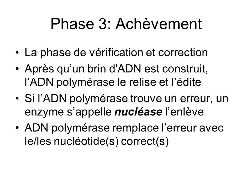 Phase 3: Achèvement La phase de vérification et correction Après quun brin d'ADN est construit, lADN polymérase le relise et lédite Si lADN polymérase