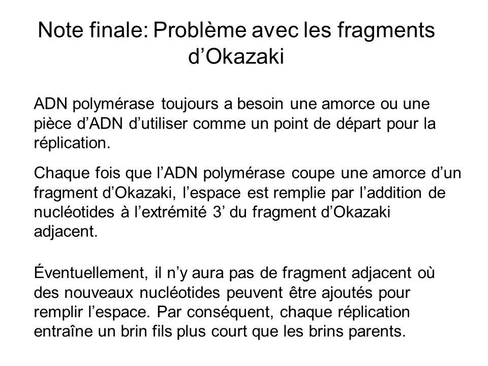 Note finale: Problème avec les fragments dOkazaki Chaque fois que lADN polymérase coupe une amorce dun fragment dOkazaki, lespace est remplie par ladd