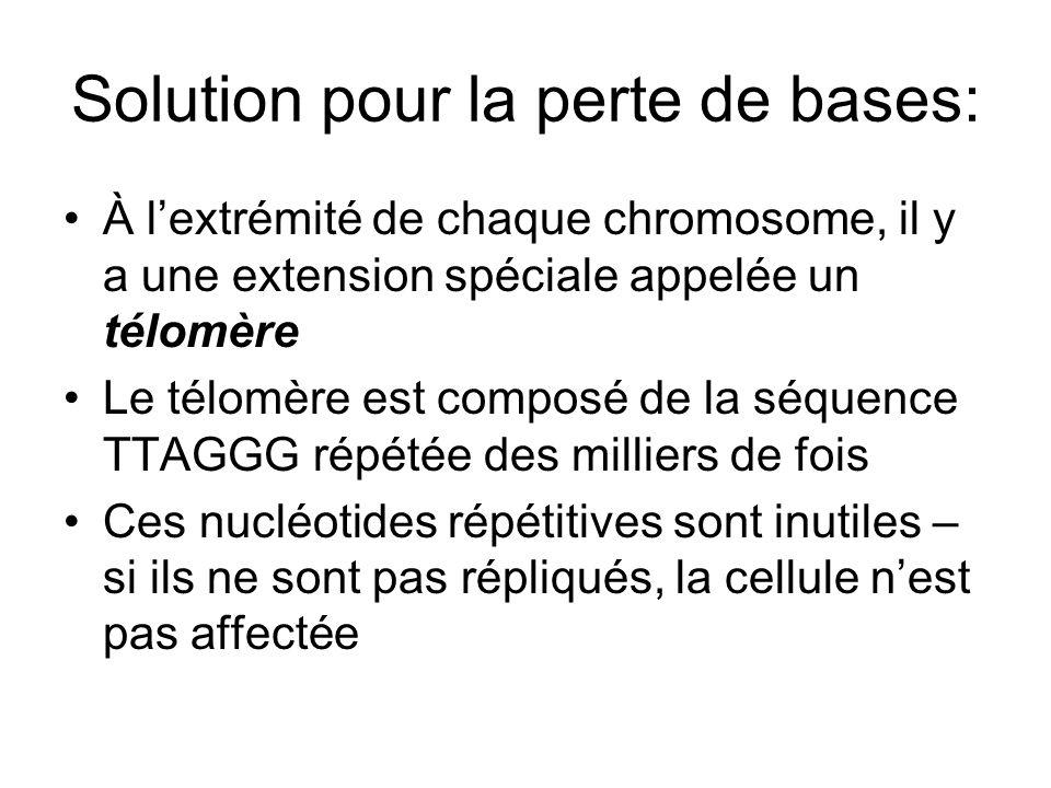 Solution pour la perte de bases: À lextrémité de chaque chromosome, il y a une extension spéciale appelée un télomère Le télomère est composé de la sé