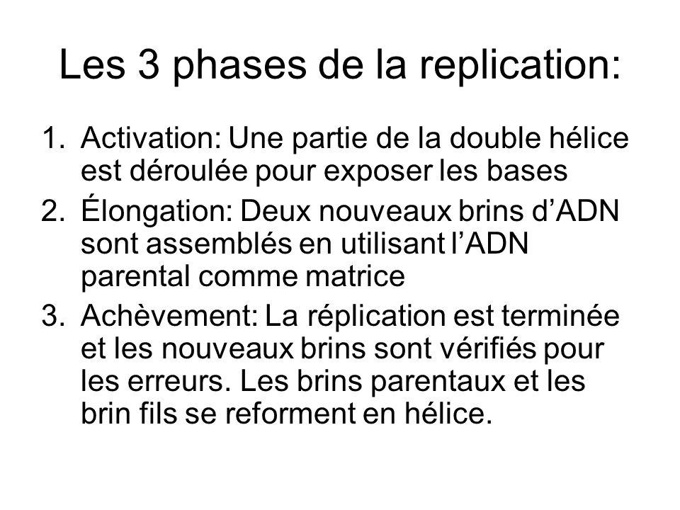 Les 3 phases de la replication: 1.Activation: Une partie de la double hélice est déroulée pour exposer les bases 2.Élongation: Deux nouveaux brins dAD