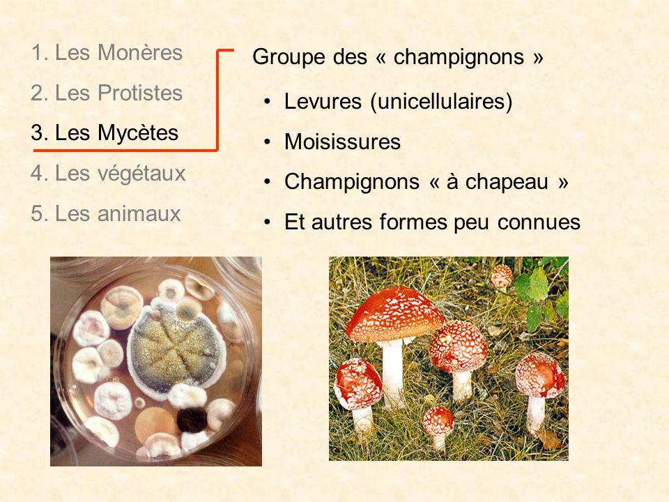 Groupe des « champignons » Levures (unicellulaires) Moisissures Champignons « à chapeau » Et autres formes peu connues 1. Les Monères 2. Les Protistes
