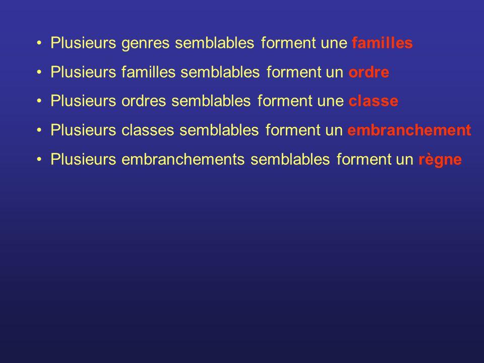 Plusieurs genres semblables forment une familles Plusieurs familles semblables forment un ordre Plusieurs ordres semblables forment une classe Plusieu