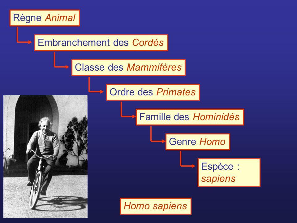 Règne Animal Embranchement des CordésClasse des MammifèresOrdre des PrimatesFamille des HominidésGenre HomoEspèce : sapiens Homo sapiens