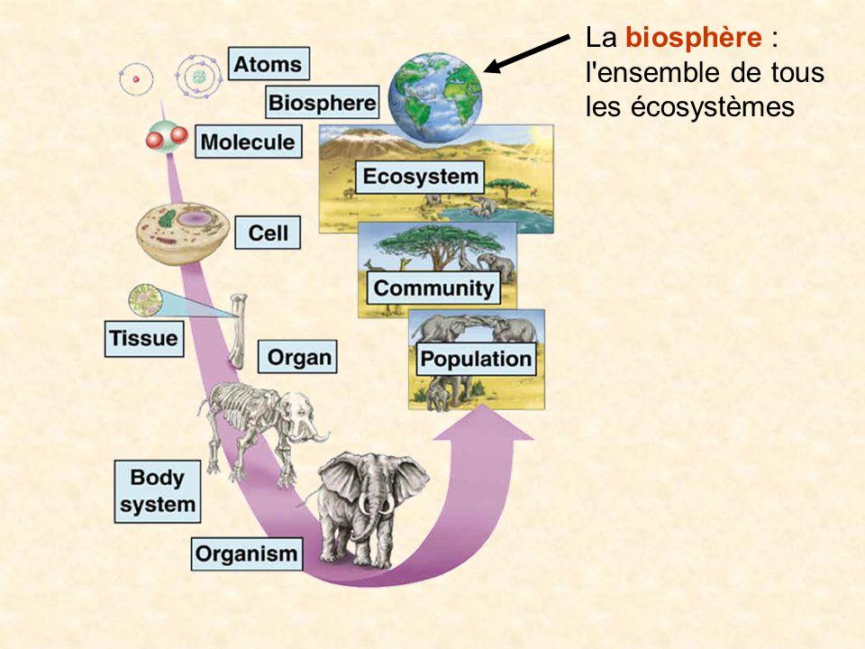 La biosphère : l'ensemble de tous les écosystèmes