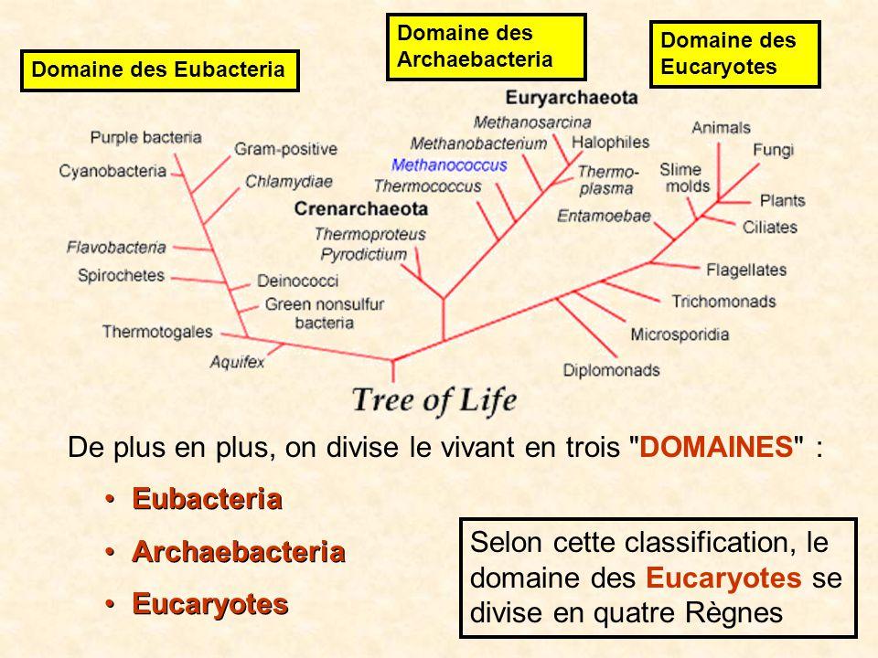 Règne Embranchement (ou phylum) Chaque catégorie = taxon On peut aussi ajouter des sous- catégories.