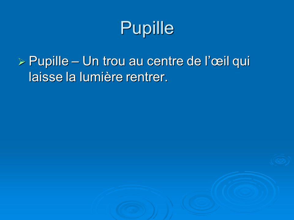 Pupille Pupille – Un trou au centre de lœil qui laisse la lumière rentrer. Pupille – Un trou au centre de lœil qui laisse la lumière rentrer.