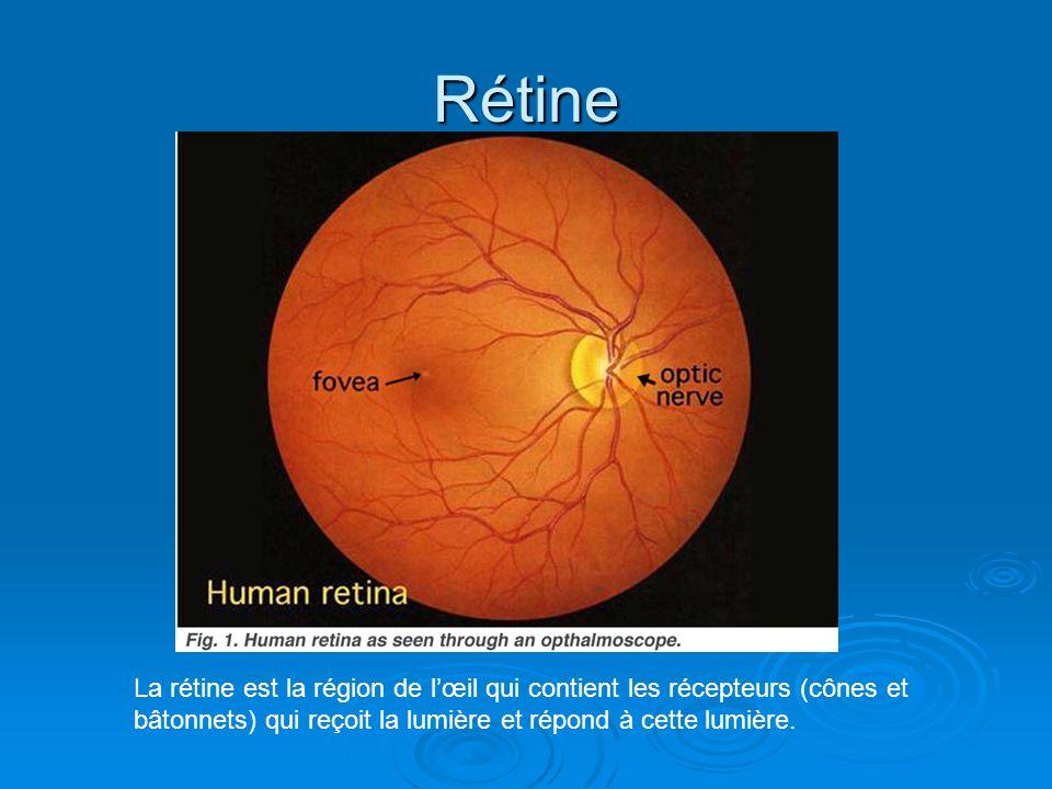 Rétine La rétine est la région de lœil qui contient les récepteurs (cônes et bâtonnets) qui reçoit la lumière et répond à cette lumière.