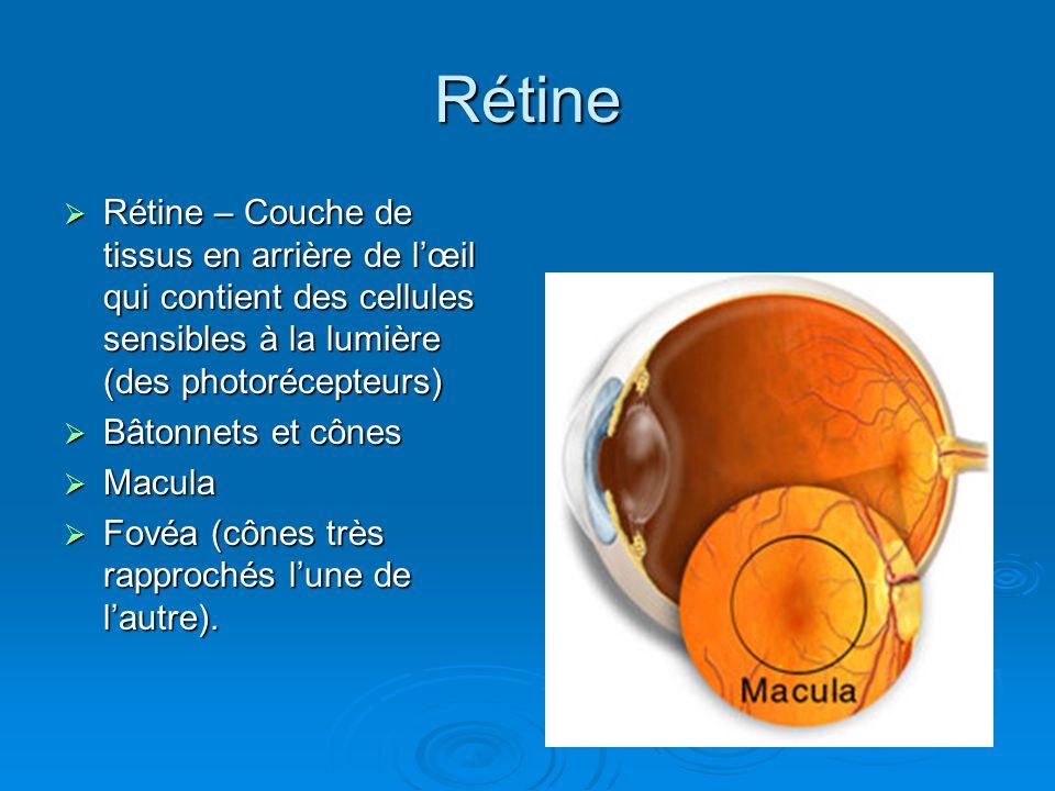 Rétine Rétine – Couche de tissus en arrière de lœil qui contient des cellules sensibles à la lumière (des photorécepteurs) Rétine – Couche de tissus e