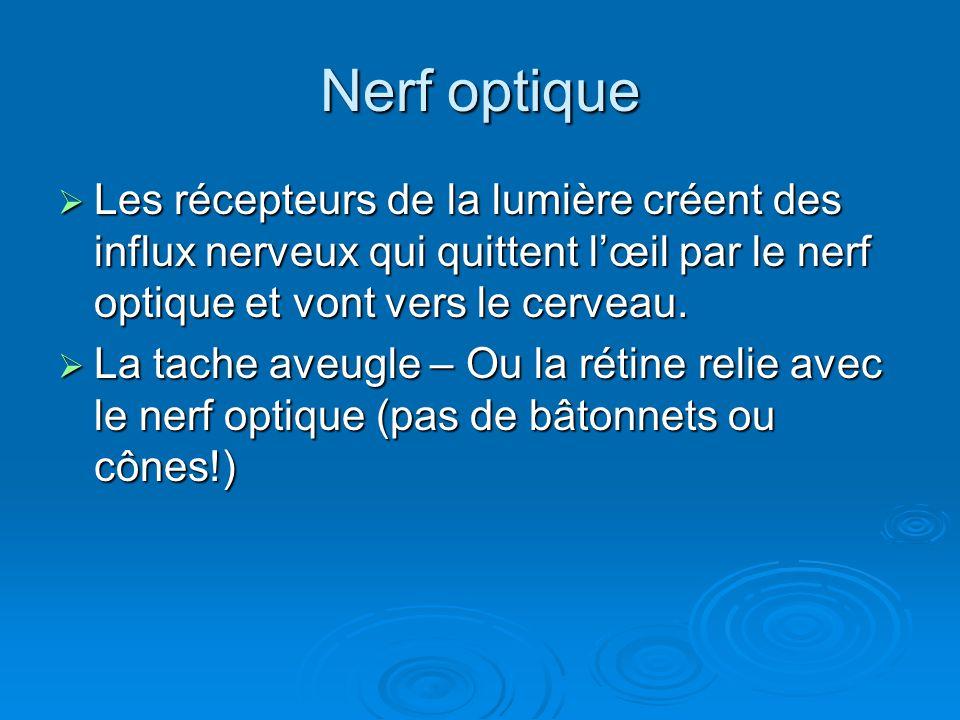Nerf optique Les récepteurs de la lumière créent des influx nerveux qui quittent lœil par le nerf optique et vont vers le cerveau. Les récepteurs de l
