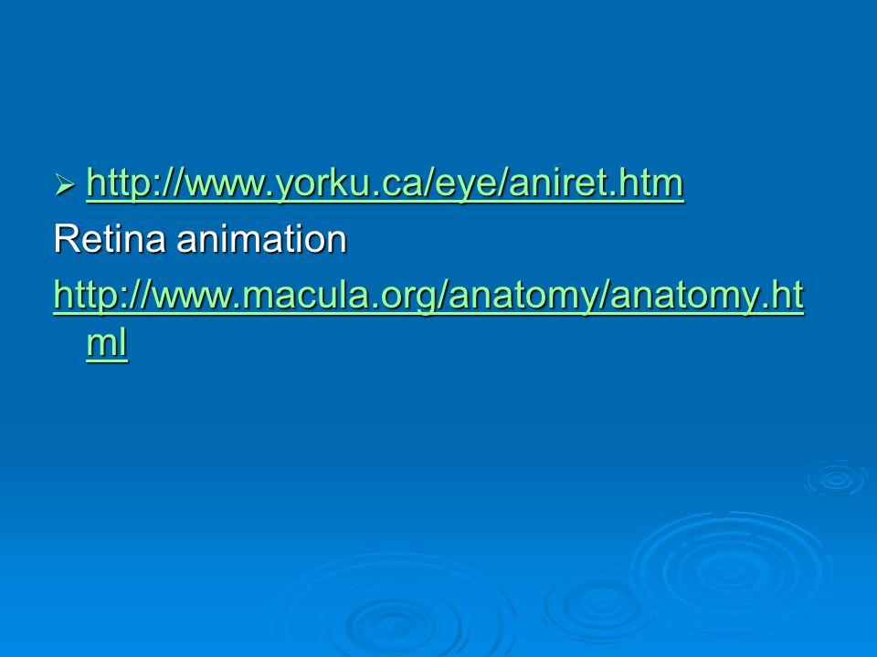http://www.yorku.ca/eye/aniret.htm http://www.yorku.ca/eye/aniret.htm http://www.yorku.ca/eye/aniret.htm Retina animation http://www.macula.org/anatom