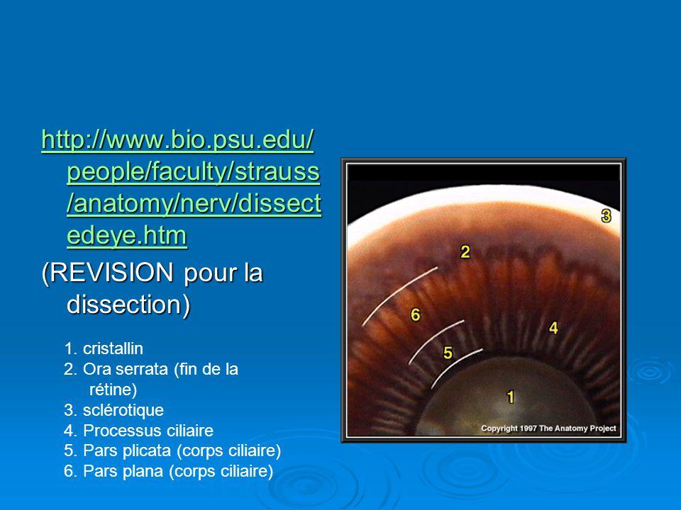 http://www.bio.psu.edu/ people/faculty/strauss /anatomy/nerv/dissect edeye.htm http://www.bio.psu.edu/ people/faculty/strauss /anatomy/nerv/dissect ed