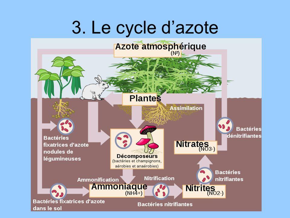 3. Le cycle dazote