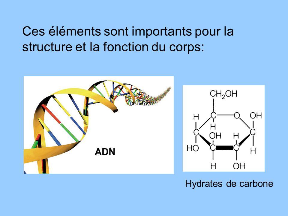 Ces éléments sont importants pour la structure et la fonction du corps: ADN Hydrates de carbone