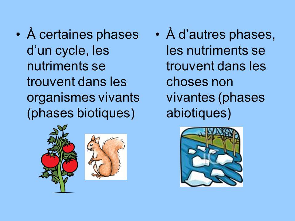 À certaines phases dun cycle, les nutriments se trouvent dans les organismes vivants (phases biotiques) À dautres phases, les nutriments se trouvent d