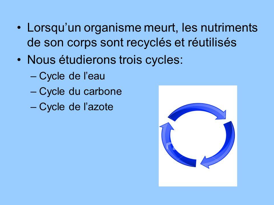 Lorsquun organisme meurt, les nutriments de son corps sont recyclés et réutilisés Nous étudierons trois cycles: –Cycle de leau –Cycle du carbone –Cycl