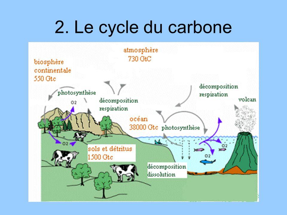 2. Le cycle du carbone