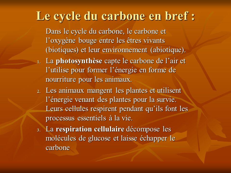 Le cycle du carbone en bref : Dans le cycle du carbone, le carbone et loxygène bouge entre les êtres vivants (biotiques) et leur environnement (abioti