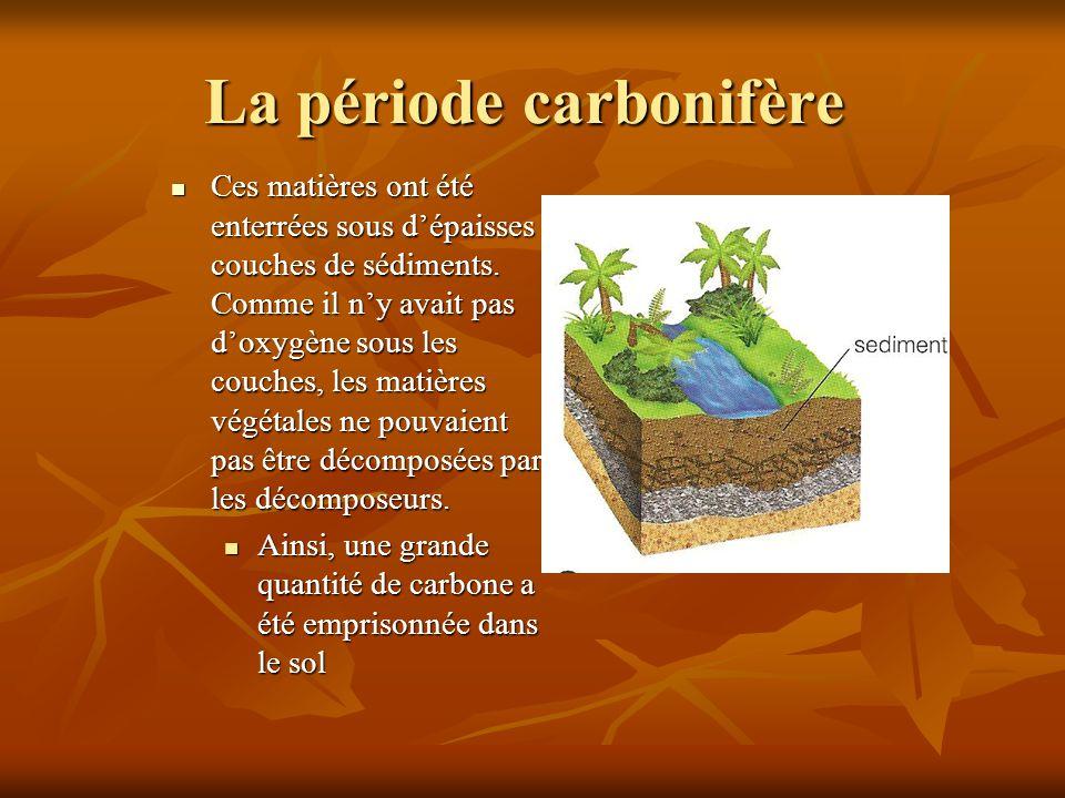 La période carbonifère Au fil de millions dannées, la matière végétale a été comprimer sous les lourdes couches de sédiments et transformée en charbon et en pétrole (les combustibles fossiles).