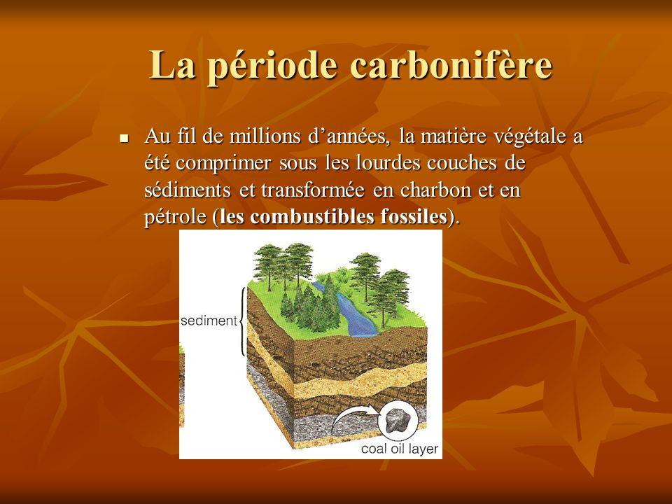 La période carbonifère Au fil de millions dannées, la matière végétale a été comprimer sous les lourdes couches de sédiments et transformée en charbon
