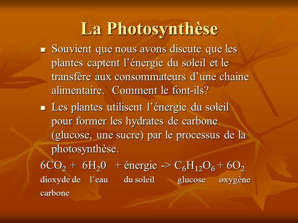 La Photosynthèse Souvient que nous avons discute que les plantes captent lénergie du soleil et le transfère aux consommateurs dune chaine alimentaire.