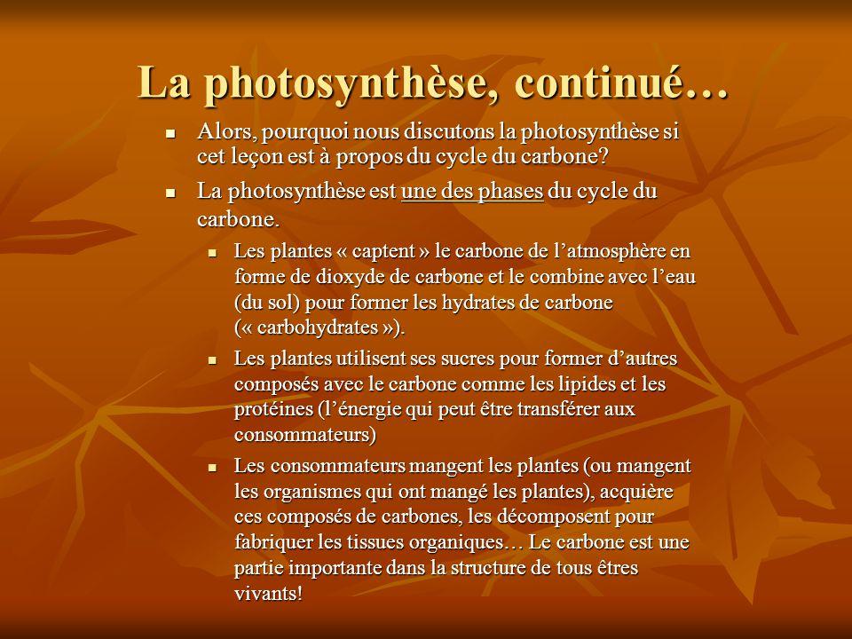 La photosynthèse, continué… Alors, pourquoi nous discutons la photosynthèse si cet leçon est à propos du cycle du carbone? Alors, pourquoi nous discut