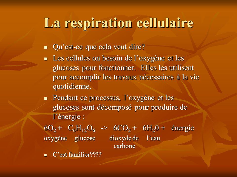 La respiration cellulaire Quest-ce que cela veut dire? Quest-ce que cela veut dire? Les cellules on besoin de loxygène et les glucoses pour fonctionne