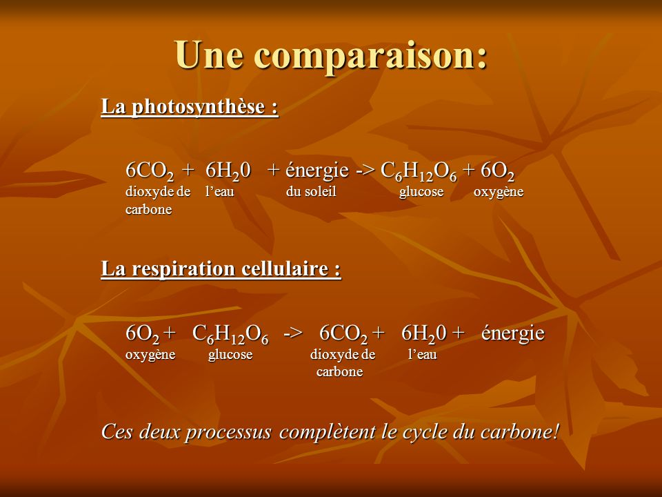 Une comparaison: La photosynthèse : 6CO 2 + 6H 2 0 + énergie -> C 6 H 12 O 6 + 6O 2 dioxyde de leau du soleil glucose oxygène carbone La respiration c
