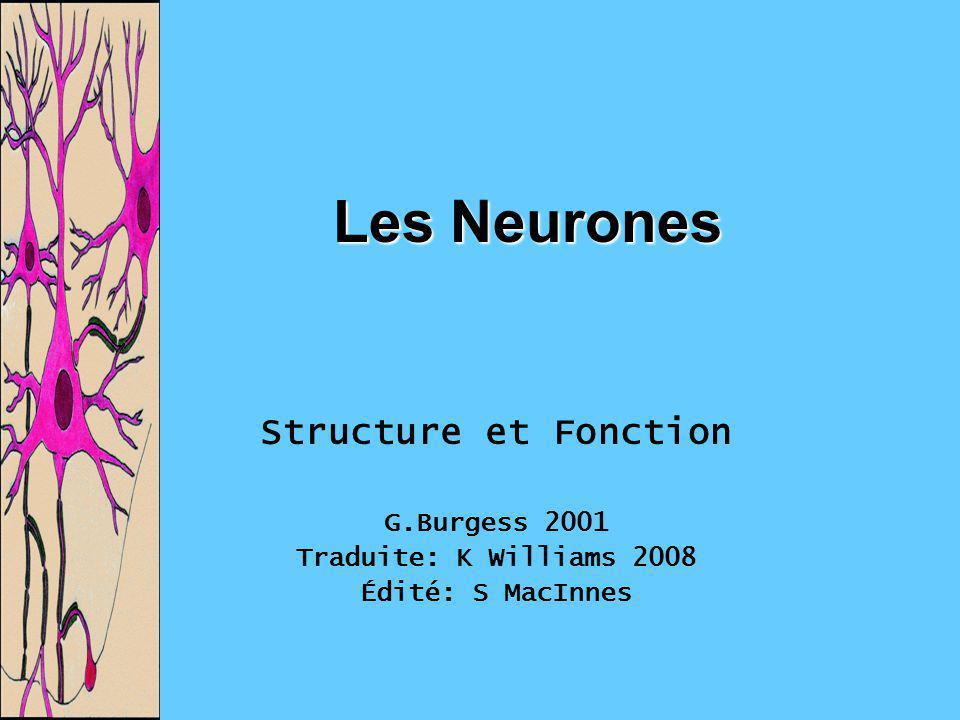Les Neurones Structure et Fonction G.Burgess 2001 Traduite: K Williams 2008 Édité: S MacInnes