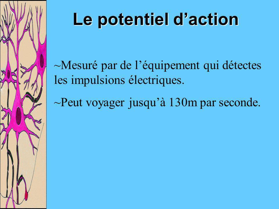 Le potentiel daction ~Mesuré par de léquipement qui détectes les impulsions électriques. ~Peut voyager jusquà 130m par seconde.