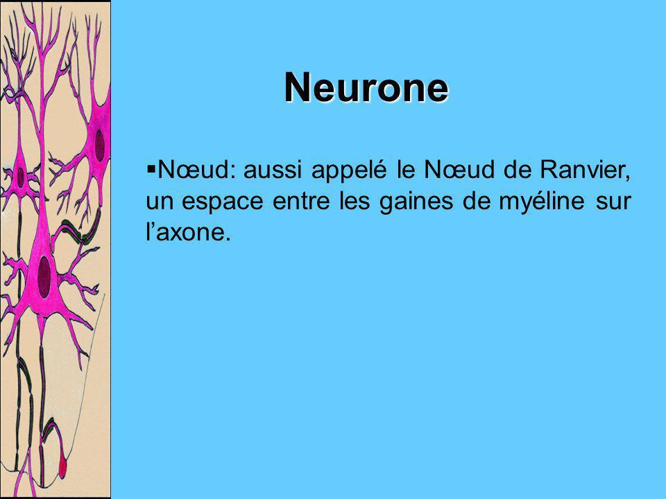 Nœud: aussi appelé le Nœud de Ranvier, un espace entre les gaines de myéline sur laxone. Neurone