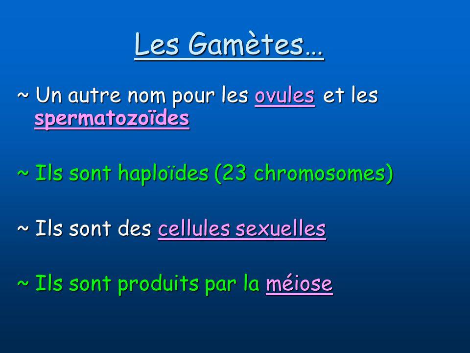 Les Gamètes… ~ Un autre nom pour les ovules et les spermatozoïdes ~ Ils sont haploïdes (23 chromosomes) ~ Ils sont des cellules sexuelles ~ Ils sont produits par la méiose