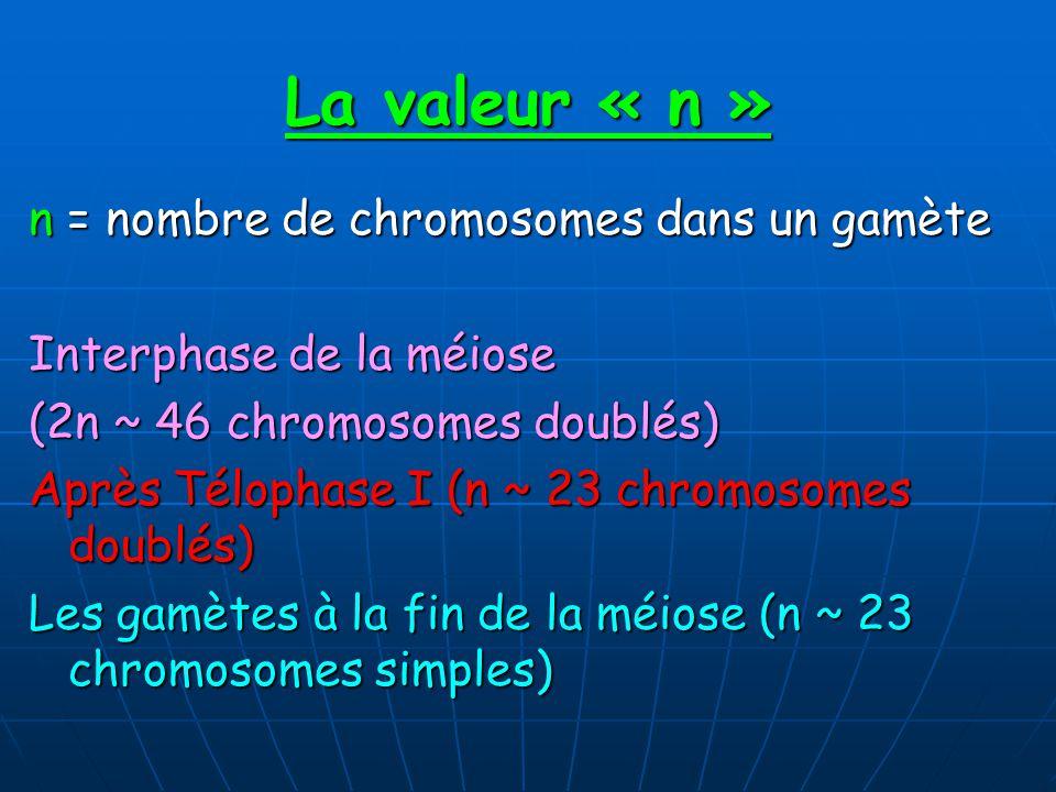 La valeur « n » n = nombre de chromosomes dans un gamète Interphase de la méiose (2n ~ 46 chromosomes doublés) Après Télophase I (n ~ 23 chromosomes doublés) Les gamètes à la fin de la méiose (n ~ 23 chromosomes simples)