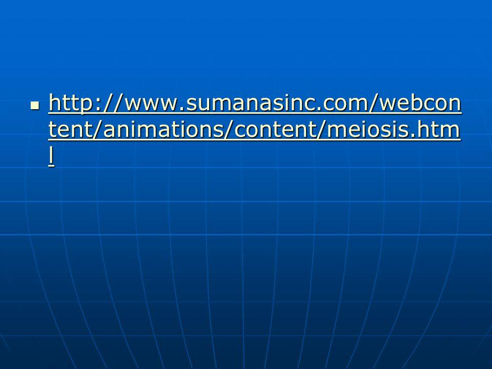 http://www.sumanasinc.com/webcon tent/animations/content/meiosis.htm l http://www.sumanasinc.com/webcon tent/animations/content/meiosis.htm l http://www.sumanasinc.com/webcon tent/animations/content/meiosis.htm l http://www.sumanasinc.com/webcon tent/animations/content/meiosis.htm l