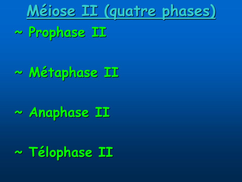 Méiose II (quatre phases) ~ Prophase II ~ Métaphase II ~ Anaphase II ~ Télophase II