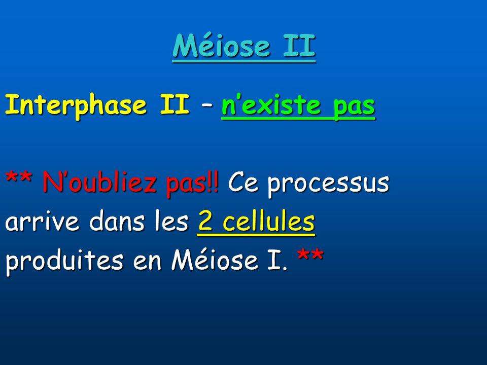 Méiose II Interphase II – nexiste pas ** Noubliez pas!.