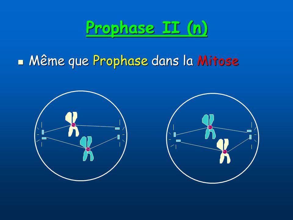 Prophase II (n) Même que Prophase dans la Mitose Même que Prophase dans la Mitose