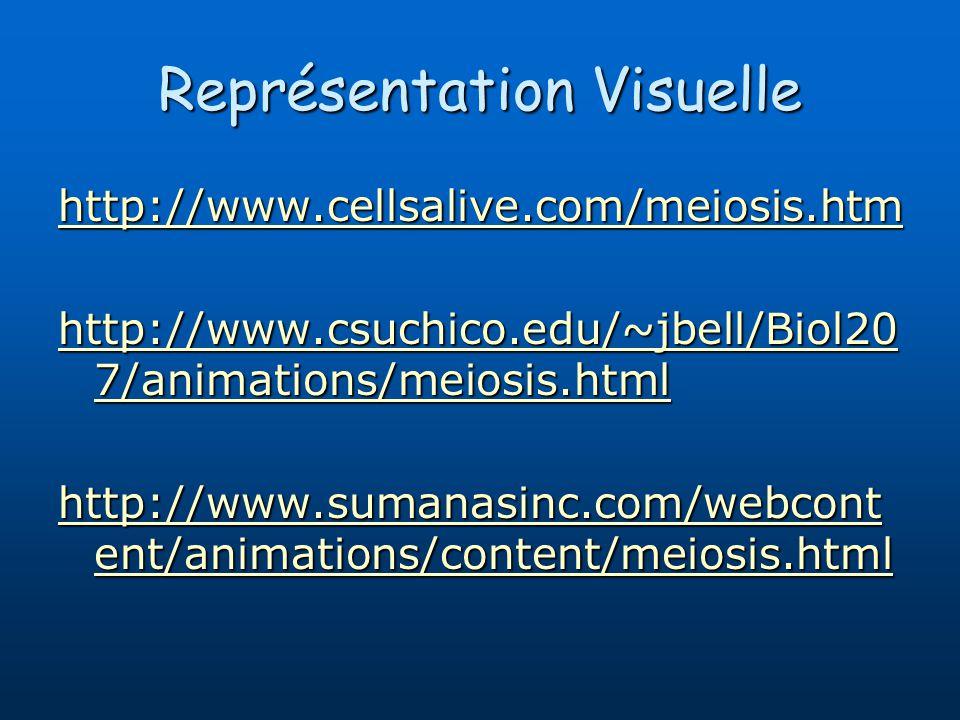 Représentation Visuelle http://www.cellsalive.com/meiosis.htm http://www.csuchico.edu/~jbell/Biol20 7/animations/meiosis.html http://www.csuchico.edu/~jbell/Biol20 7/animations/meiosis.html http://www.sumanasinc.com/webcont ent/animations/content/meiosis.html http://www.sumanasinc.com/webcont ent/animations/content/meiosis.html Mitosis vs.