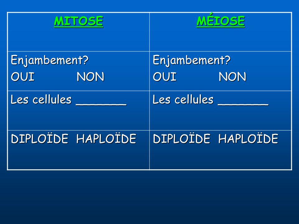 Télophase I (n) Division Cellulaire