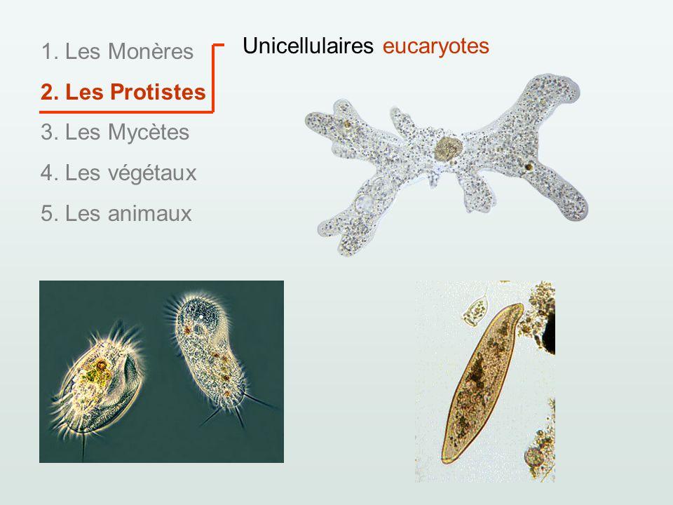 1. Les Monères 2. Les Protistes 3. Les Mycètes 4. Les végétaux 5. Les animaux Unicellulaires eucaryotes