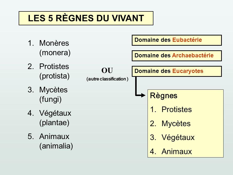 LES 5 RÈGNES DU VIVANT 1.Monères (monera) 2.Protistes (protista) 3.Mycètes (fungi) 4.Végétaux (plantae) 5.Animaux (animalia) Domaine des Eubactérie Do