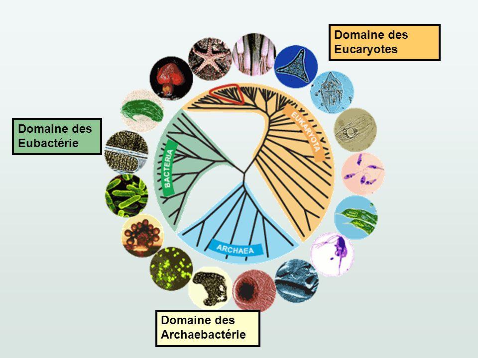 Domaine des Eubactérie Domaine des Archaebactérie Domaine des Eucaryotes