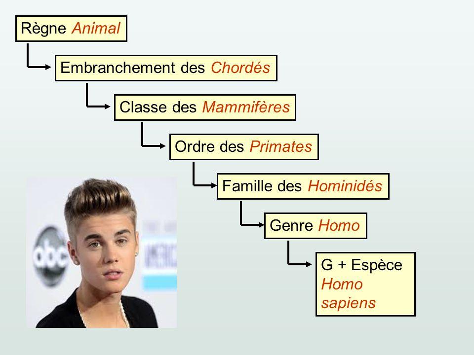 Règne Animal Embranchement des ChordésClasse des MammifèresOrdre des PrimatesFamille des HominidésGenre HomoG + Espèce Homo sapiens