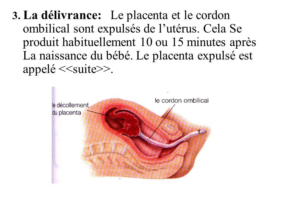 3.La délivrance: Le placenta et le cordon ombilical sont expulsés de lutérus.