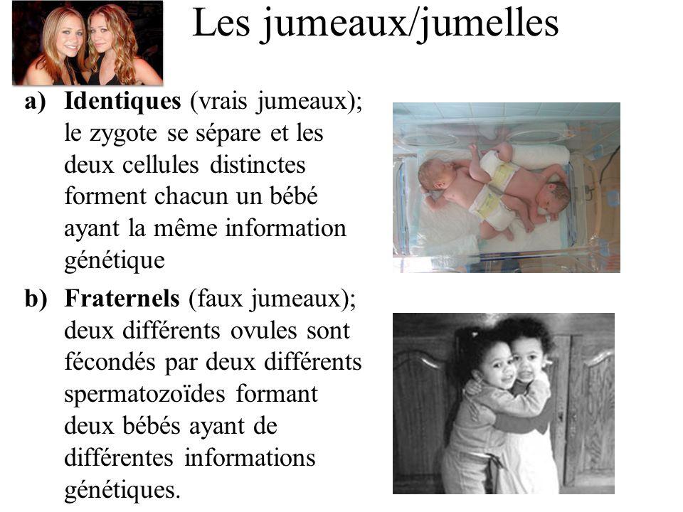 Les jumeaux/jumelles a)Identiques (vrais jumeaux); le zygote se sépare et les deux cellules distinctes forment chacun un bébé ayant la même information génétique b)Fraternels (faux jumeaux); deux différents ovules sont fécondés par deux différents spermatozoïdes formant deux bébés ayant de différentes informations génétiques.