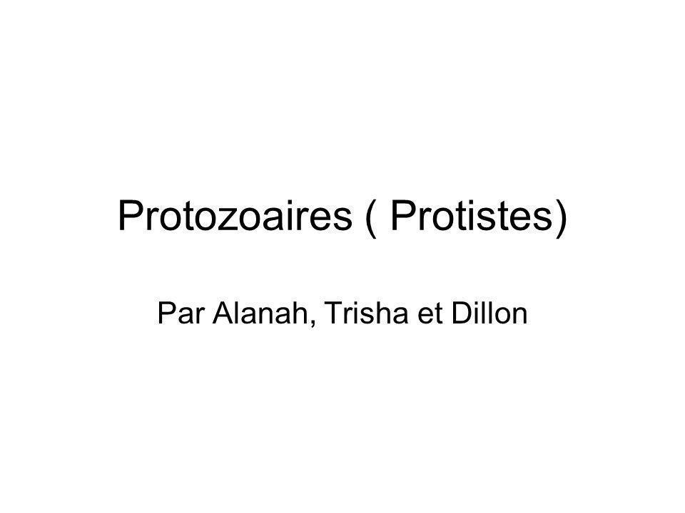 Protozoaires ( Protistes) Par Alanah, Trisha et Dillon