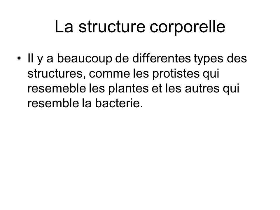 La structure corporelle Il y a beaucoup de differentes types des structures, comme les protistes qui resemeble les plantes et les autres qui resemble